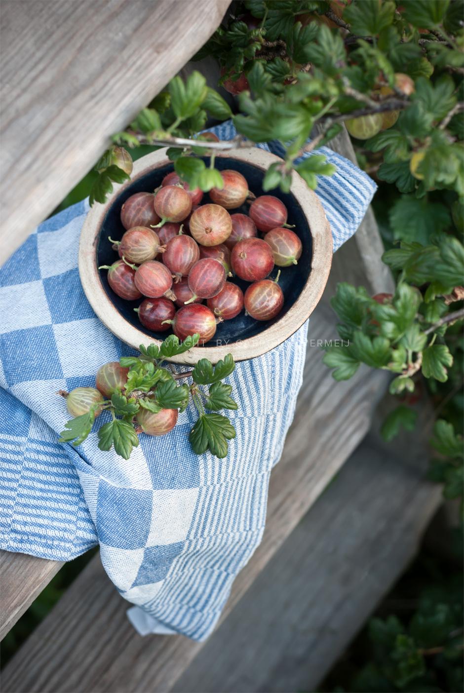 Bowl of fresh gooseberries by Gabrielle Vermeij