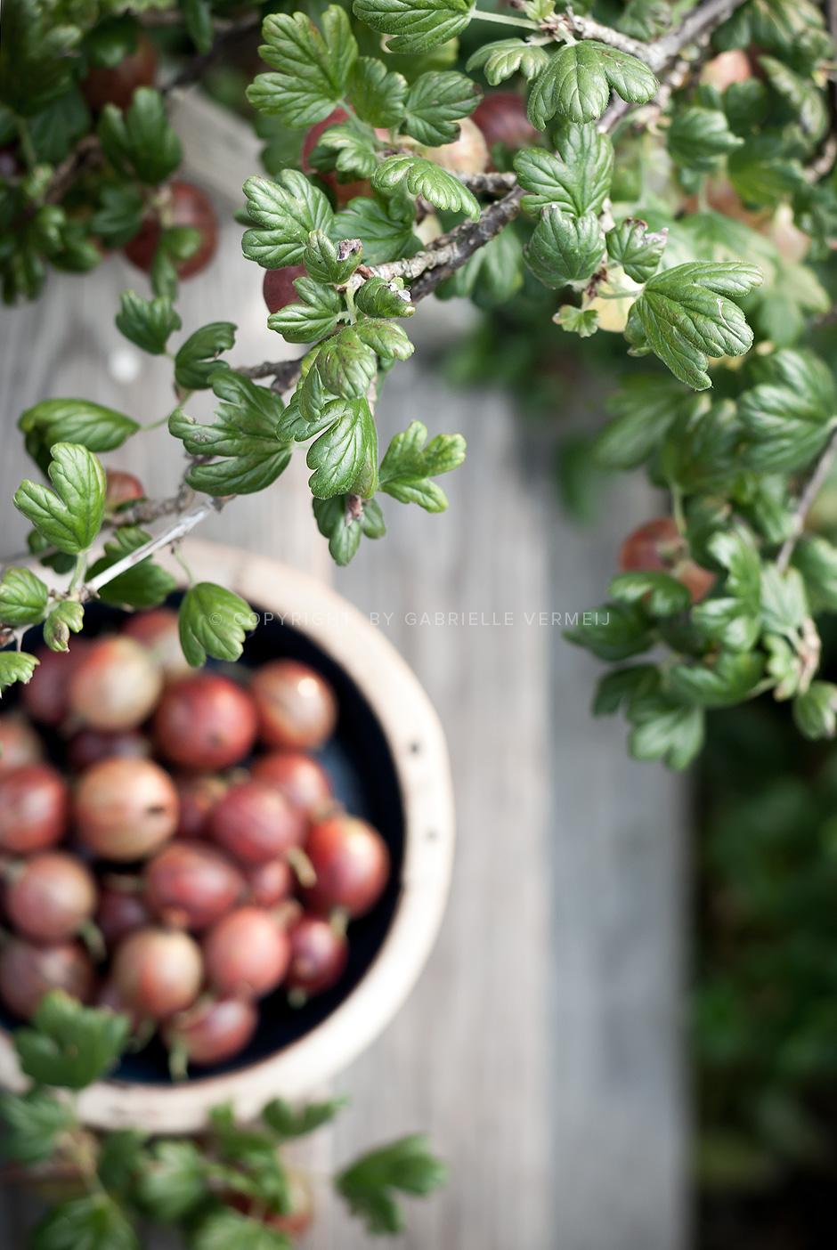 fresh gooseberries by Gabrielle Vermeij