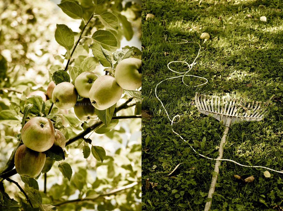 Ripe fruit waiting to be harvest by Gabrielle Vermeij