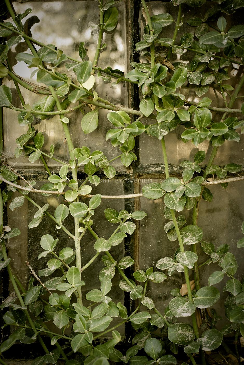 Farm window covers by plants by Gabrielle Vermeij