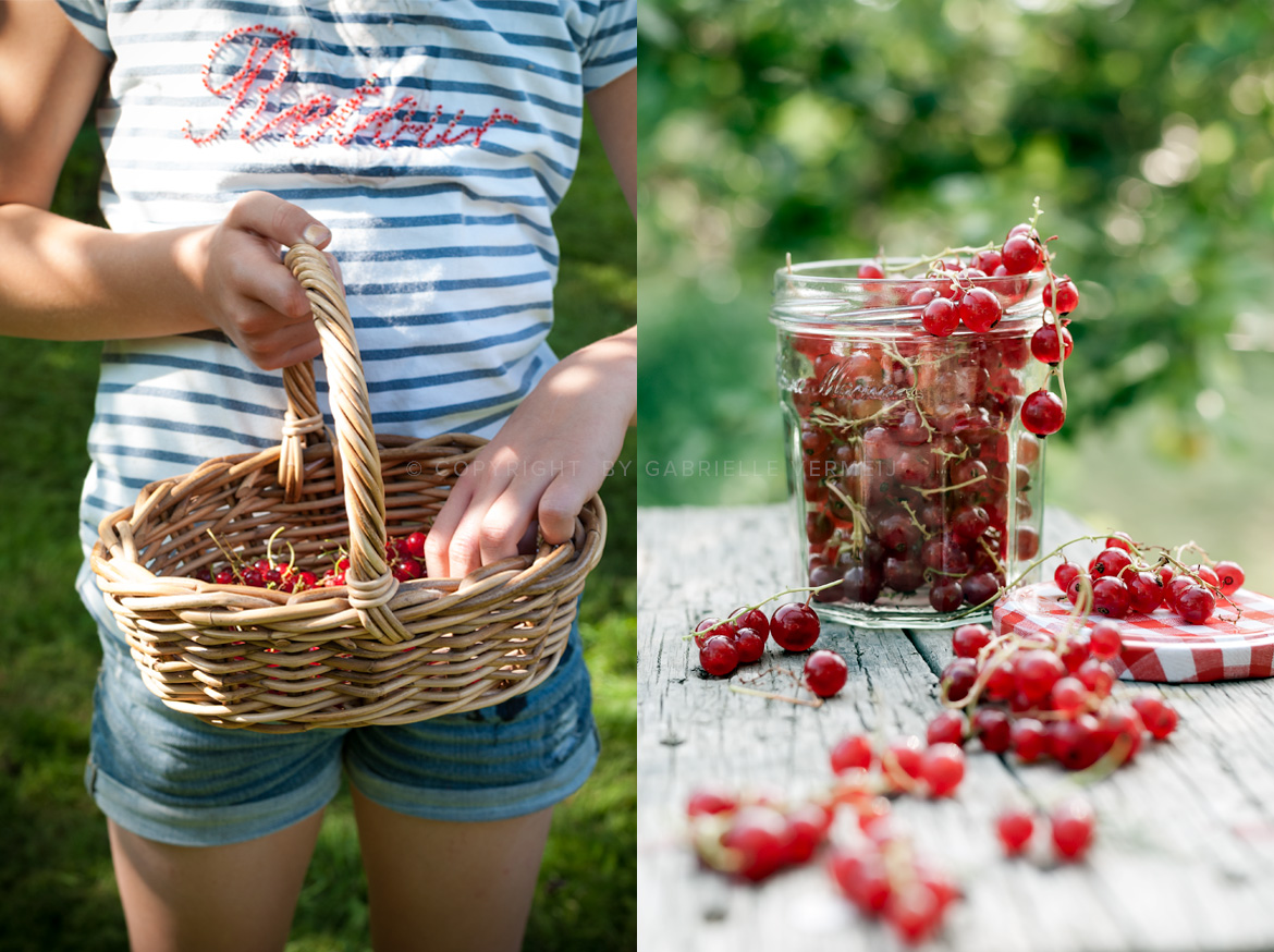 Picking red currants in the garden