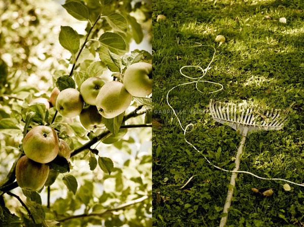Gabrielle Vermeij_farmers orchard