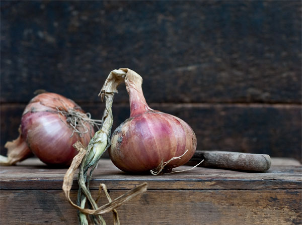 Organic shallots bought by a local farm